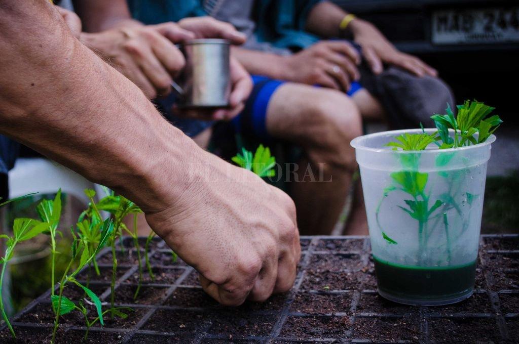 El miércoles comienza la venta de marihuana en farmacias — Uruguay