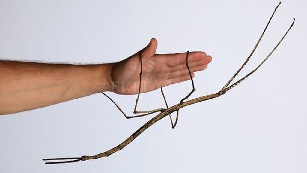 China cría insecto más grande del mundo