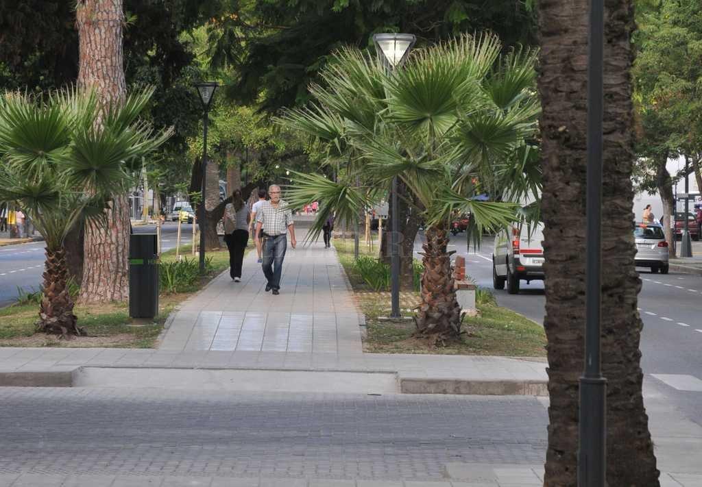 El relevamiento comenzó en 2016 y finalizará el año que viene. Estudian los árboles que están en la ciudad, en paseos como Bulevar Gálvez y Pellegrini, Avenida Freyre y Parque Juan de Garay, entre otros. <strong>Foto:</strong> Luis Cetraro