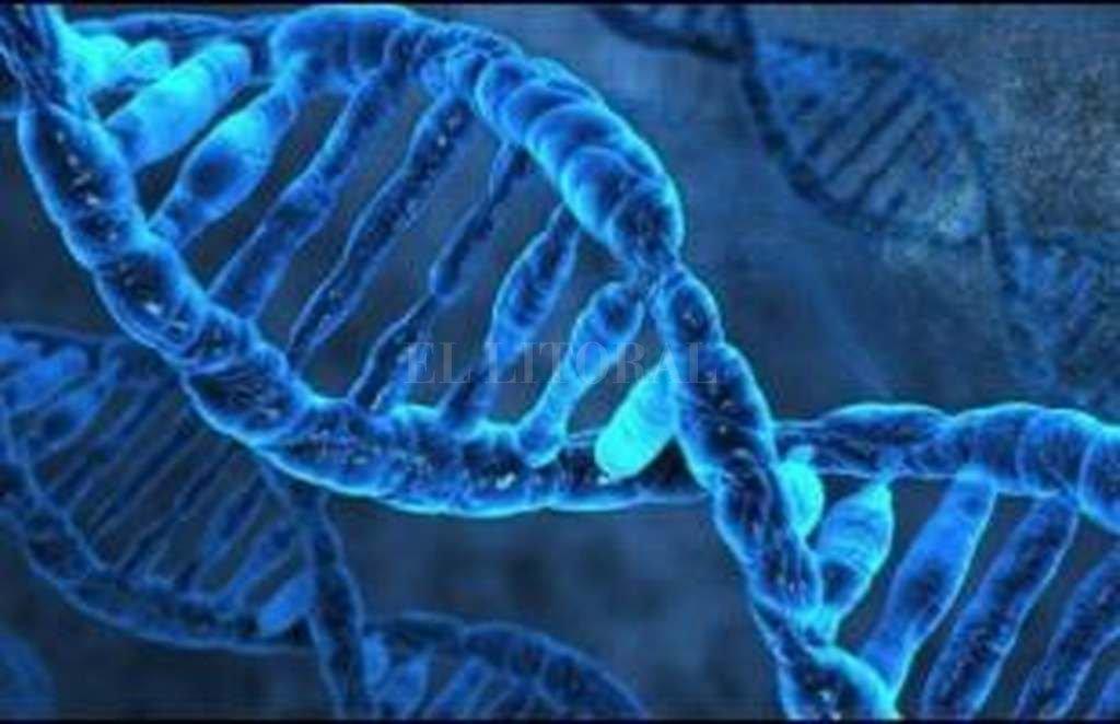 Primer intento de editar el genoma de un cuerpo humano