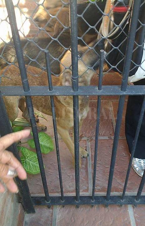 Perros rescatados de la casa de Mitre al 4900. Gentileza