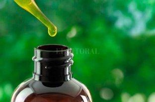 Ordenan restituir plantas de cannabis a una mujer que elabora aceite para su nieto - Imagen ilustrativa -