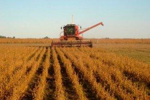Se cosecha el girasol con buenos rendimientos y calidad en los granos