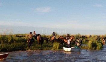Continúa la evacuación del ganado de islas