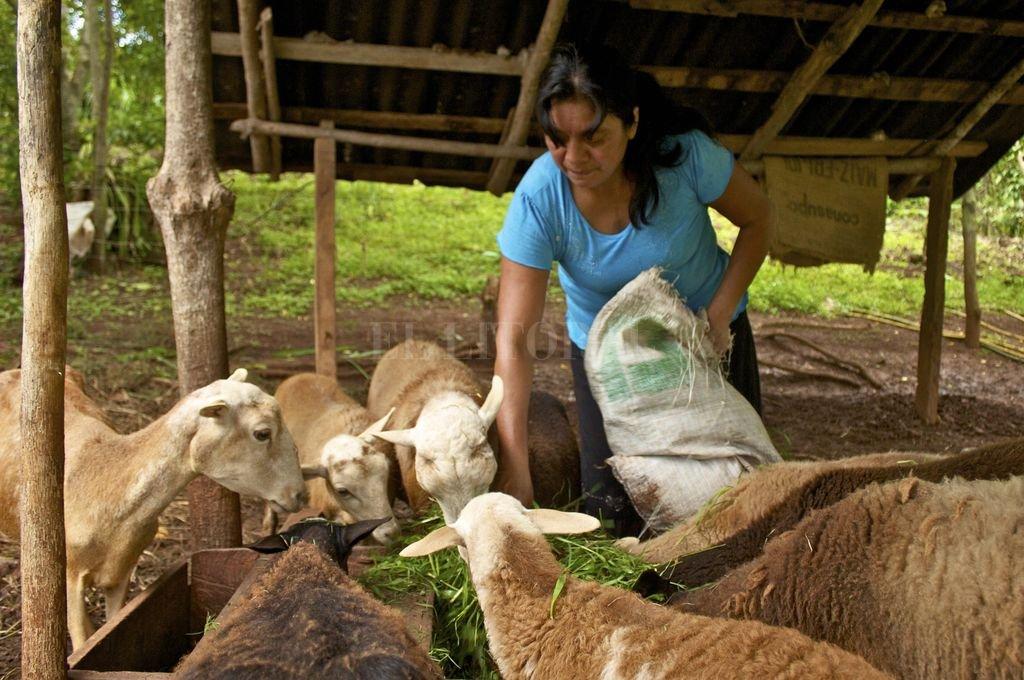 Las mujeres que viven en las zonas rurales tienen menos acceso a los recursos productivos, como la tierra y el ganado. También tienen menos acceso a servicios financieros y tecnología. Crédito: El Litoral
