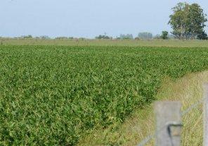 El déficit hídrico viene afectando a la producción agrícola del área