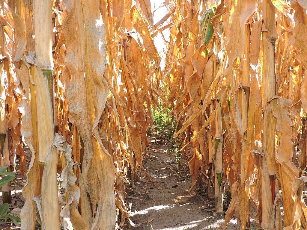 Bolsa de cereales Córdoba