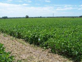 De alerta a realidad: déficit hídrico con consecuencias en la futura producción santafesina