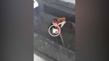 El cangrejo que se defiende con un cuchillo