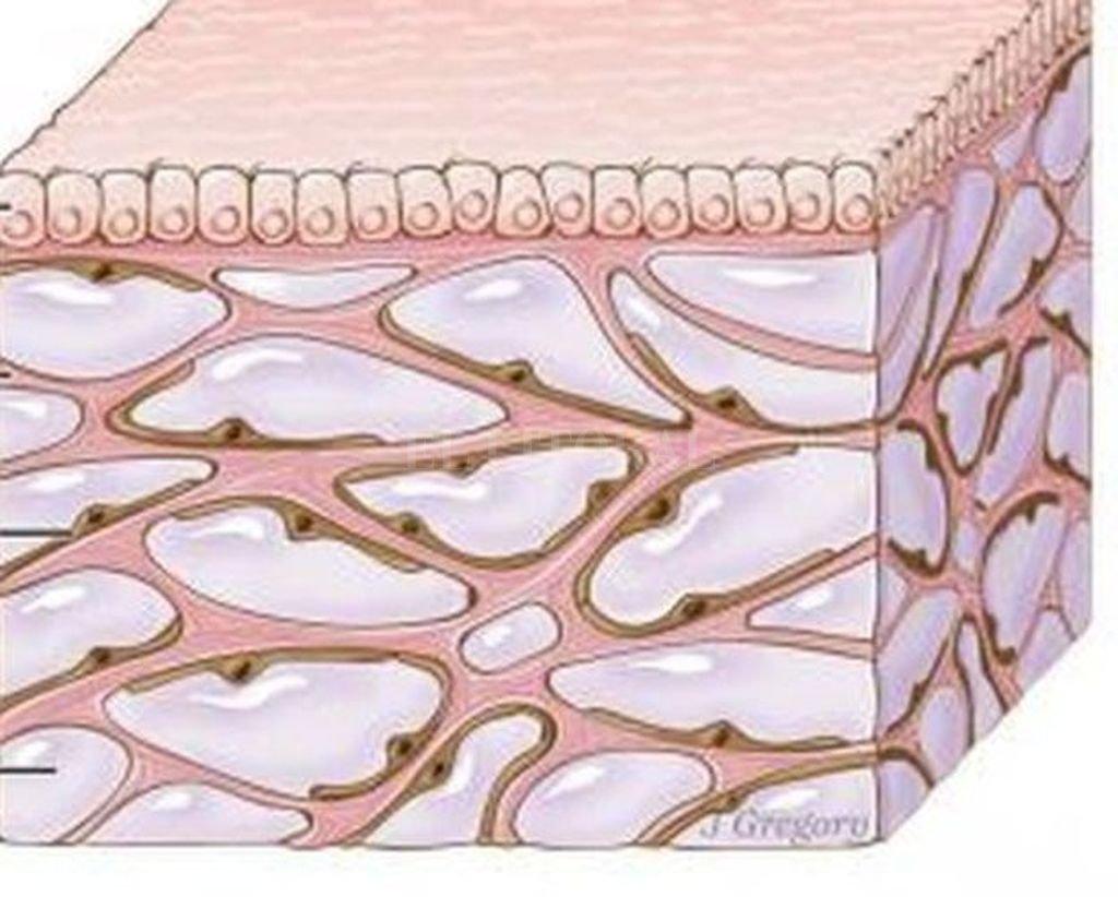 La capa de arriba es la mucosa. Las partes rosas son las estructuras de colágeno que crean las cavidades llenas de fluido, en lila. <strong>Foto:</strong> BBC Mundo