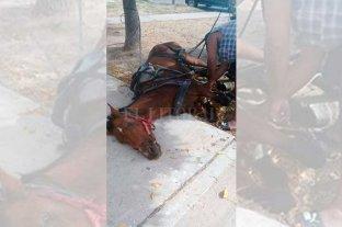 Rescataron un caballo maltratado