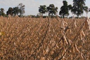 Los rendimientos en soja de primera revelaron el impacto del período seco