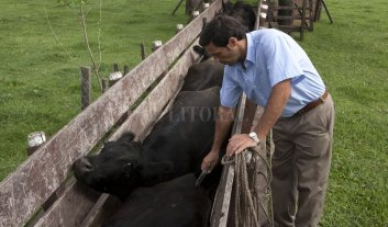 Desarrollan nueva vacuna antirrábica para ganadería