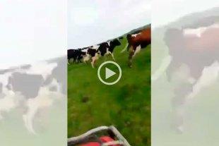 Video: ¡Dale que juega Uruguay! El grito para apurar a las vacas
