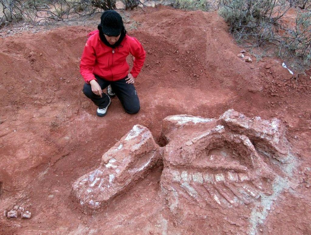 Hubo dinosaurios gigantescos por San Juan, hace 200 millones de años. <strong>Foto:</strong> Agencia de Ciencia Tecnología y Sociedad.