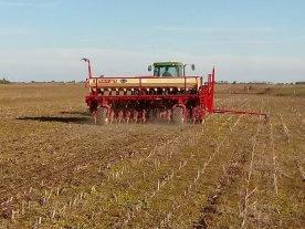 Continuó sembrándose trigo, superando las hectáreas de campañas anteriores
