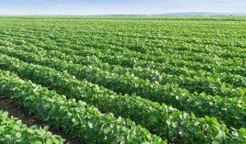 Un proyecto de ley propone reservas naturales obligatorias en campos agrícolas