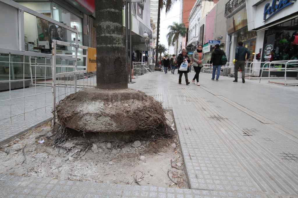 Desprotegida. El polvo, el frío y la exposición al sol pueden dañar las raíces. <strong>Foto:</strong> Guillermo Di Salvatore