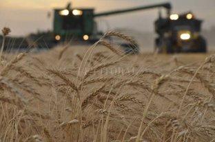 Las lluvias detuvieron la cosecha de la soja, arroz, algodón y sorgo