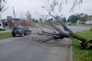 El viento tiró un árbol