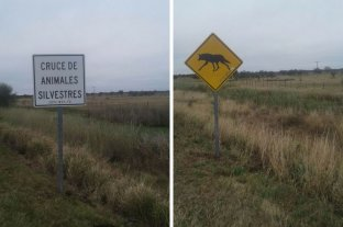Aguará guazú: colocan carteles en rutas para prevenir atropellamientos