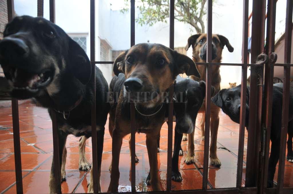Espera. Parte de los perros que aguardan un amo que los adopte, hoy, en una veterinaria del norte de la ciudad. <strong>Foto:</strong> Flavio Raina
