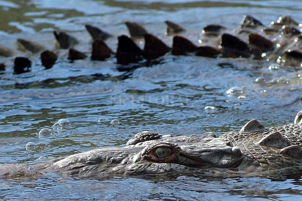 Cocodrilo gigante devora a mujer y a su bebé en un lago