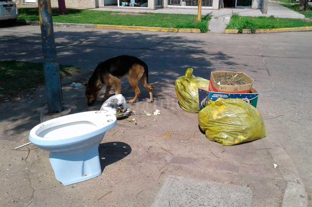 Basura de todo tipo. Hasta un bidet en la vereda. Los perros del barrio aprovecharon e hicieron de las suyas Crédito: Periodismo Ciudadano / WhatsApp