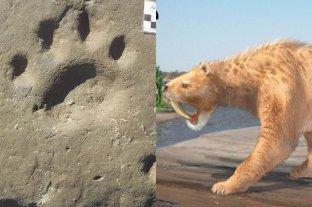 Hallan en una playa argentina la huella de un tigre de hace 10.000 años