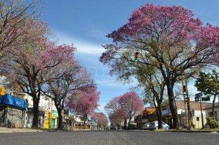Santo Tomé: estiman que la masa forestal alcanza los 35.000 árboles