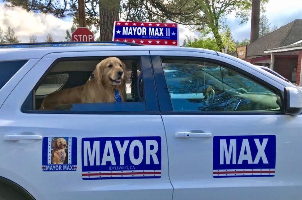 Un pueblo de Estados Unidos eligió como alcalde a un perro