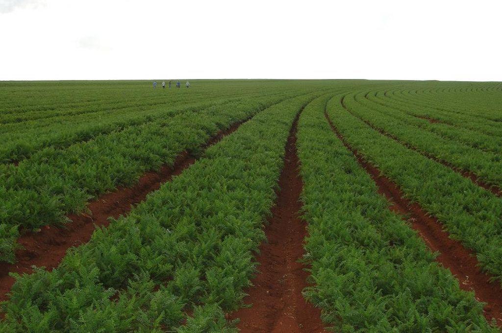 Santa Rosa de Calchines inaugura una planta para aprovechar descartes de zanahorias