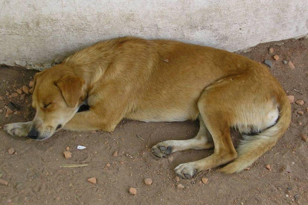 Denuncian la muerte de 10 perros por envenenamiento en Ceres