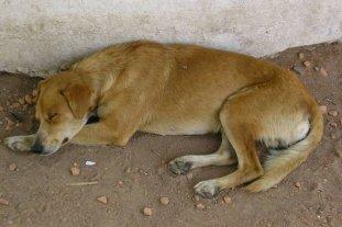 Denuncian la muerte de 10 perros por envenenamiento en Ceres -  -