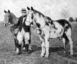 Día Nacional del Caballo: a 90 años de la hazaña de Gato y Mancha