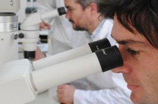 Logran mejorar el ADN de los animales en una sola generación