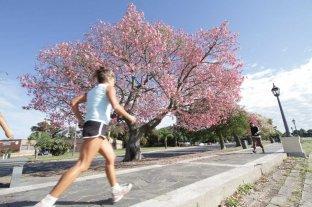 """Con fondos provinciales, plantaron más de 50.000 árboles nativos - En la costanera, los palos borrachos """"pintan"""" de rosado la zona del Faro cuando florecen."""