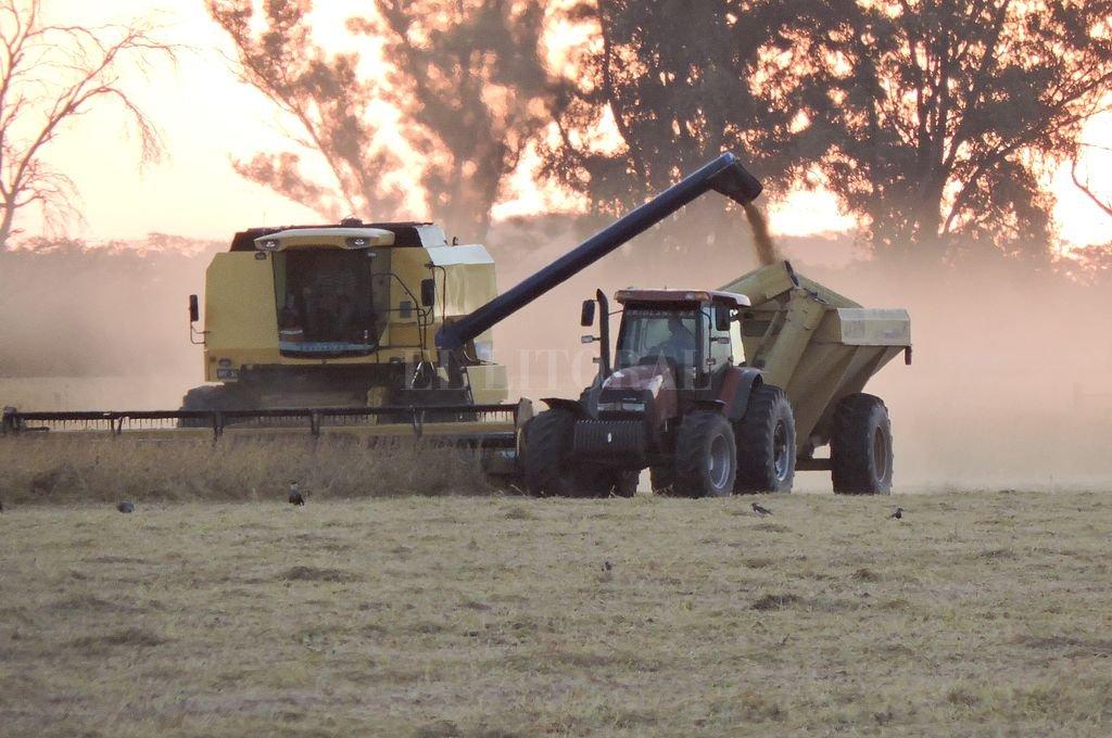 Cosecha agrícola 2018/19: pronostican una campaña récord