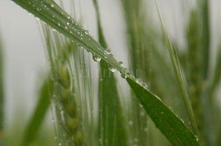 La primavera comenzó con eventos climáticos localmente importantes