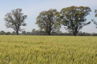 El gran desafío: cuidar el suelo argentino