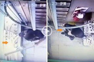 Con cámaras de seguridad, descubrieron a un policía robando en un supermercado -  -