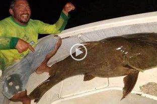 Pescaron un manguruyú de 80 kilos en el río Paraná