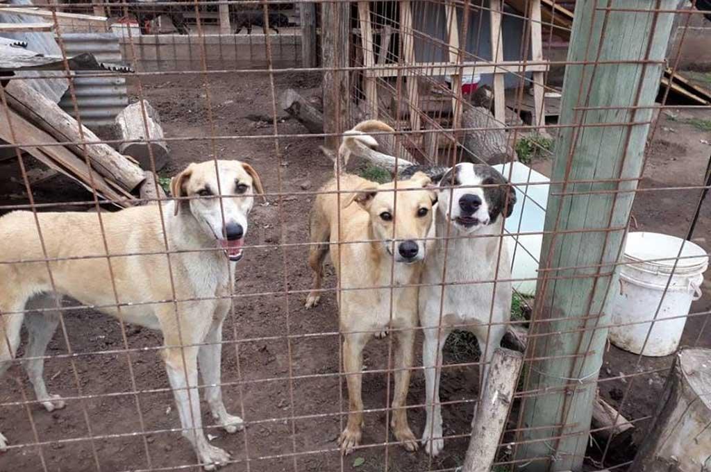 FIELES COMPAÑEROS. El refugio de San Jerónimo Norte contiene a unos 50 perros, los que están divididos en grupos de 5 o 6 animales entre los 14 caniles existentes.  <strong>Foto:</strong> Comuna de SJN