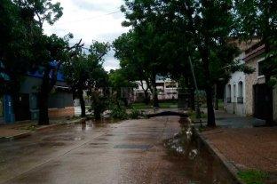 El temporal generó diversos problemas en el tendido eléctrico - Las fuertes ráfagas de viento generaron caída de árboles en algunos puntos de la ciudad -