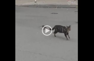 "Video: A lo ""Tom y Jerry"" un ratón persiguió a un gato"