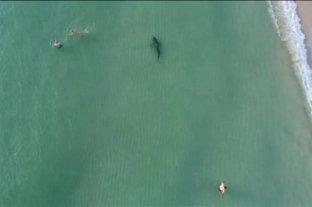 ¡Cuidado! Tiburón nadando entre los bañistas de Miami Beach