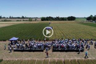 Se presentó HB4, el primer trigo tolerante a sequía del mundo -  -