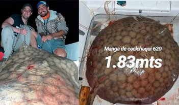 Pescaron una raya de 130 kilos y la devolvieron al río Paraná -  -