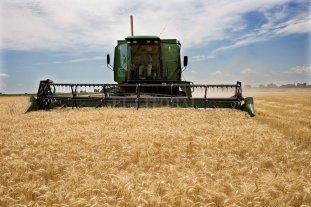 Se reanudó la cosecha de trigo: se obtendrían más de 1.150.000 toneladas