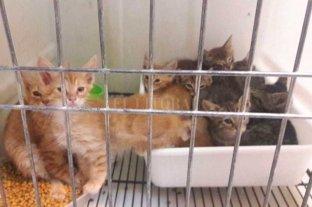 Secuestraron 40 gatos en mal estado en una vivienda del sur de la ciudad